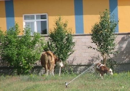 Erzurum'da şok yaratan villalar 2