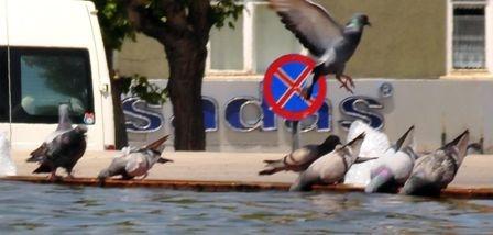 Güvercinlerin susadığı an! 1