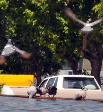 Güvercinlerin susadığı an! 2