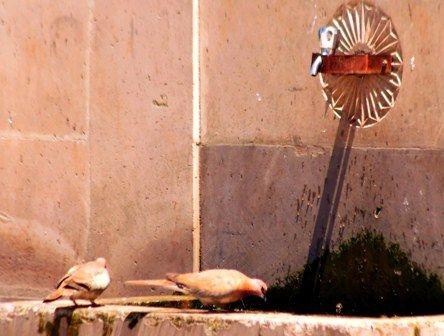 Güvercinlerin susadığı an! 4
