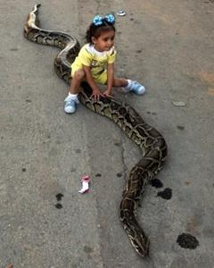 Yılanla tehlikeli oyun 1