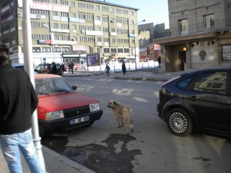 Erzurum 2011'e gün sayıyor 1