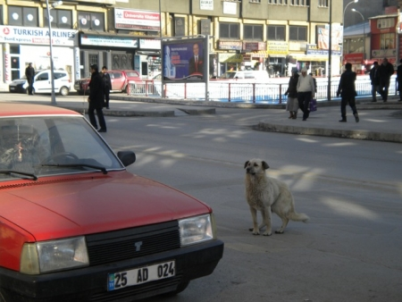 Erzurum 2011'e gün sayıyor 2