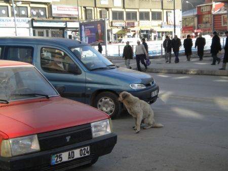 Erzurum 2011'e gün sayıyor 3