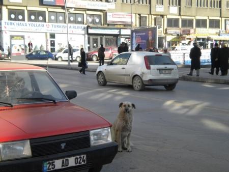 Erzurum 2011'e gün sayıyor 4