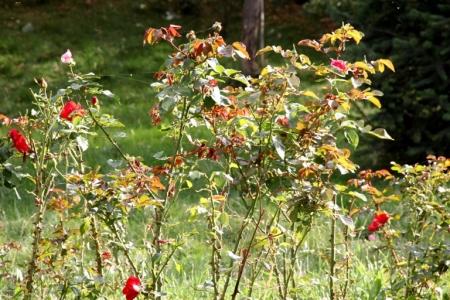 Doğu'da karpostallık sonbahar 1