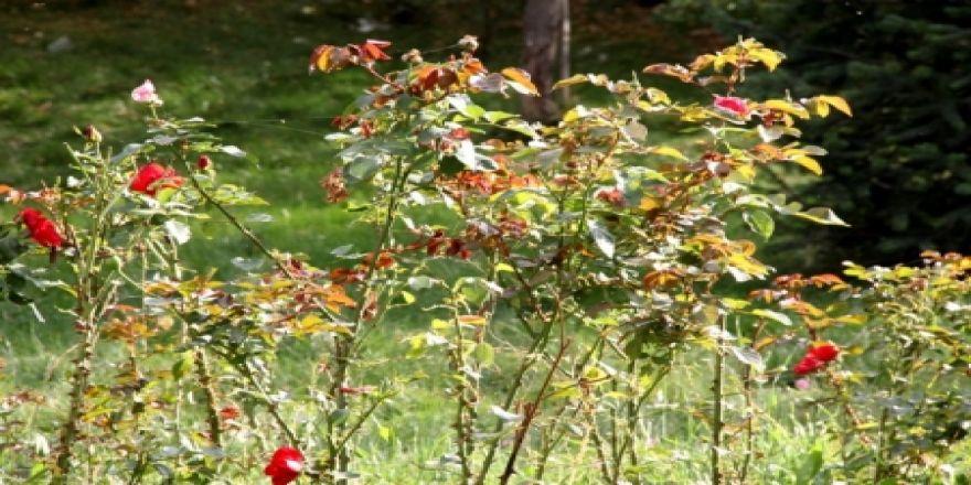 Doğu'da karpostallık sonbahar