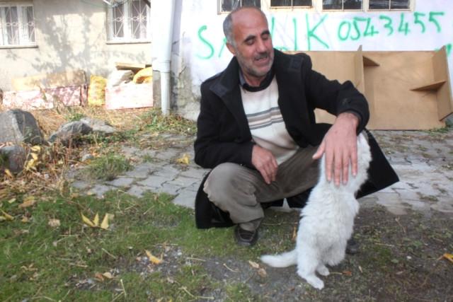 Ağrılı Vatandaş Gözü Kör Olan Kedi İçin Yardım Bekliyor