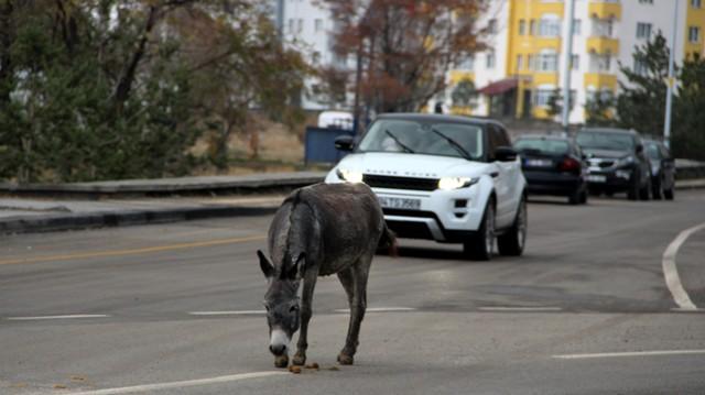 Trafikte ilerleyen eşek sürücülere zor anlar yaşattı