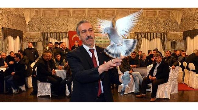 Erzurum Taklacı Güvercinler Yarıştırıldı