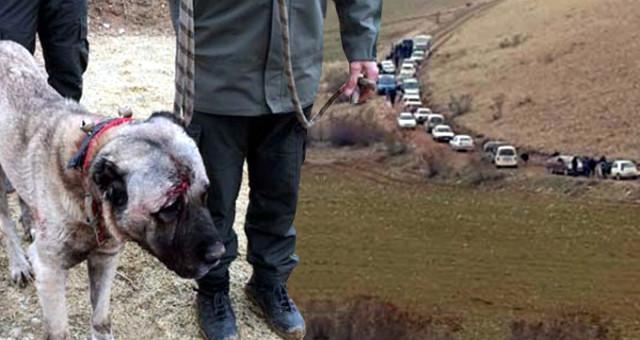 Köpek Dövüşü için 7 İlden Gelen 100 Bahisçiye Operasyon