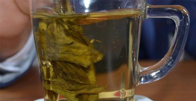 Türkiye'de ilk kez organik yeşil çay üretildi