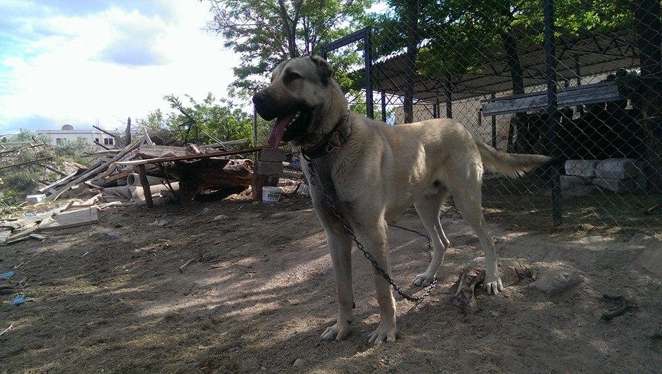 Hınıs'ta Köpeğini çaldılar ölümle tehdit ettiler
