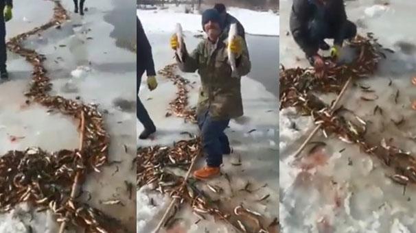 Buz tutan derede 'balık böyle tutulur!
