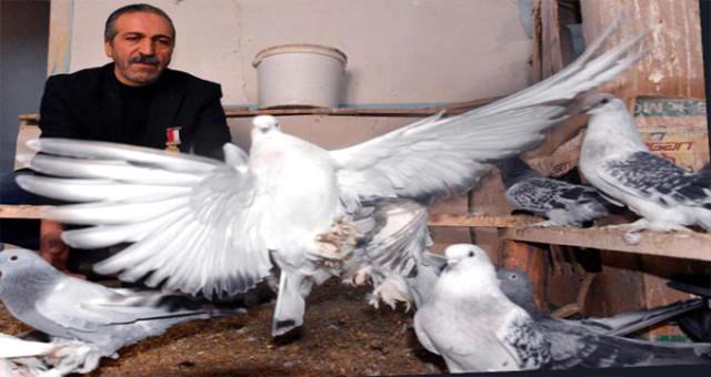 Güvercinleri İçin Bin Liraya 2 Ev Tuttu, İçini Kuşlara Göre Döşedi