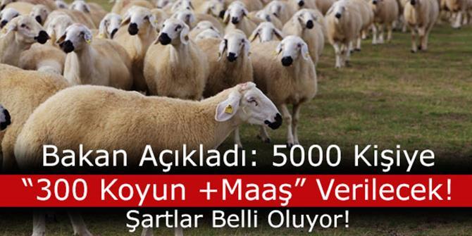 300 koyun projesi detayları ortaya çıkmaya başladı