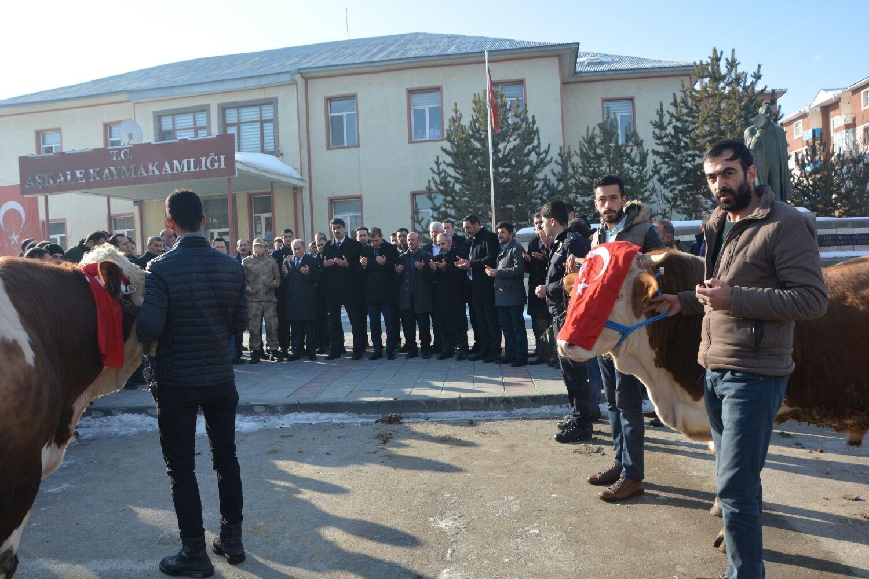 Aşkale'den Afrin'deki Mehmetçiğe 2 adet tosun gönderdiler
