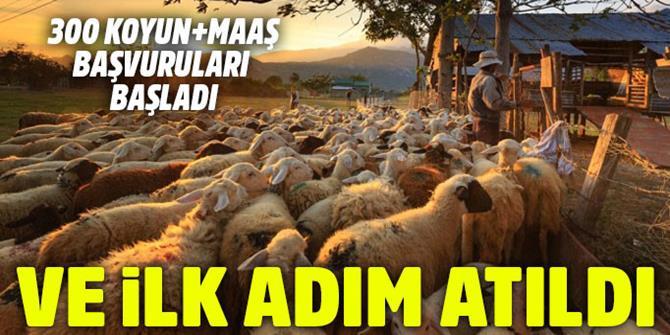 'Köyüne geri dönene 300 koyun' projesinde başvurular başladı