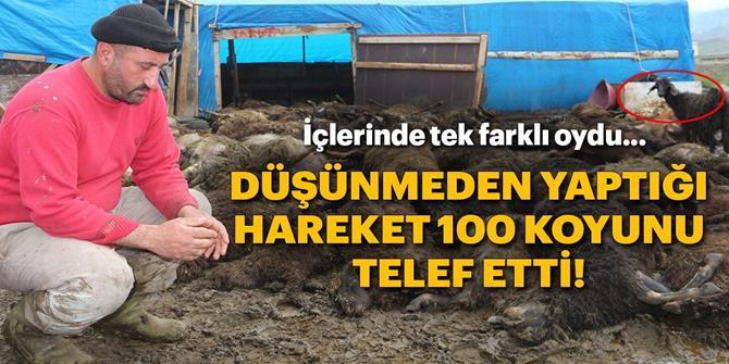 Erzurum'da Çadırda havasız kalan 100 koyun telef oldu