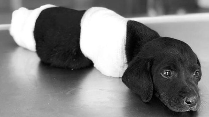Sapanca'daki yavru köpek vahşetiyle ilgili soruşturma başlatıldı