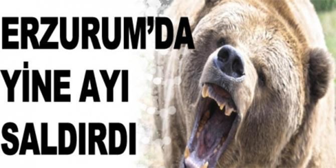 Erzurum'da ayı saldırısı: 1 ölü