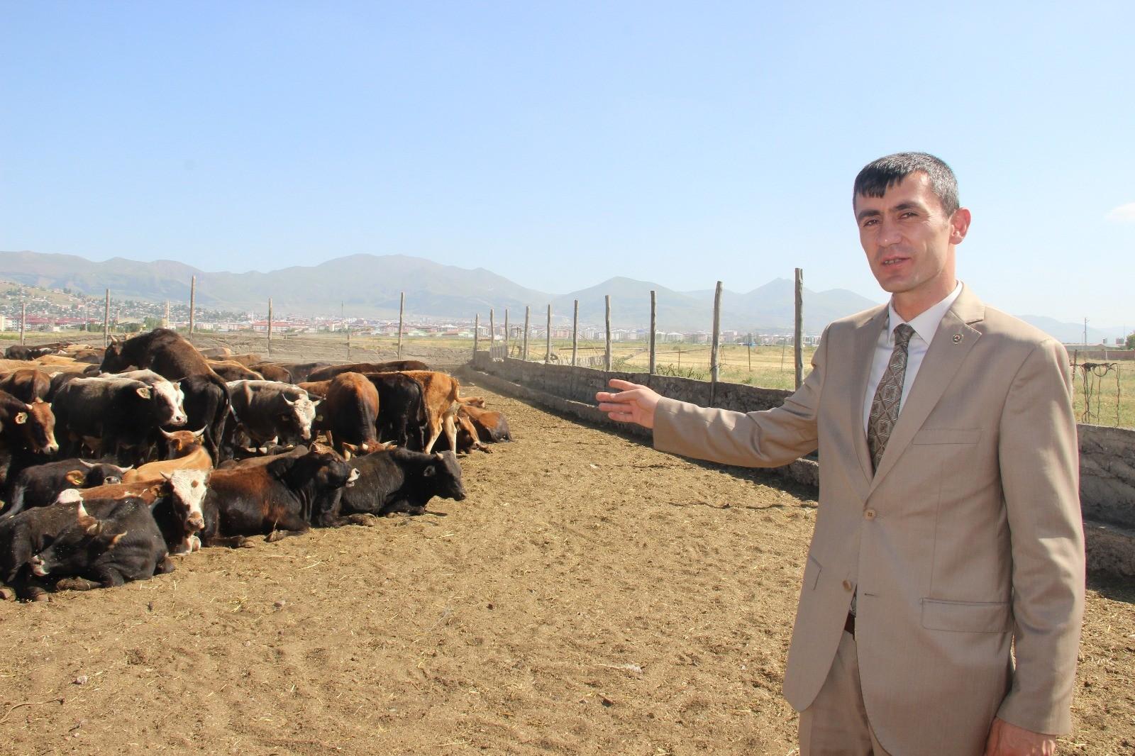 Erzurumlu üreticiler Kurban Bayramı'na hazır