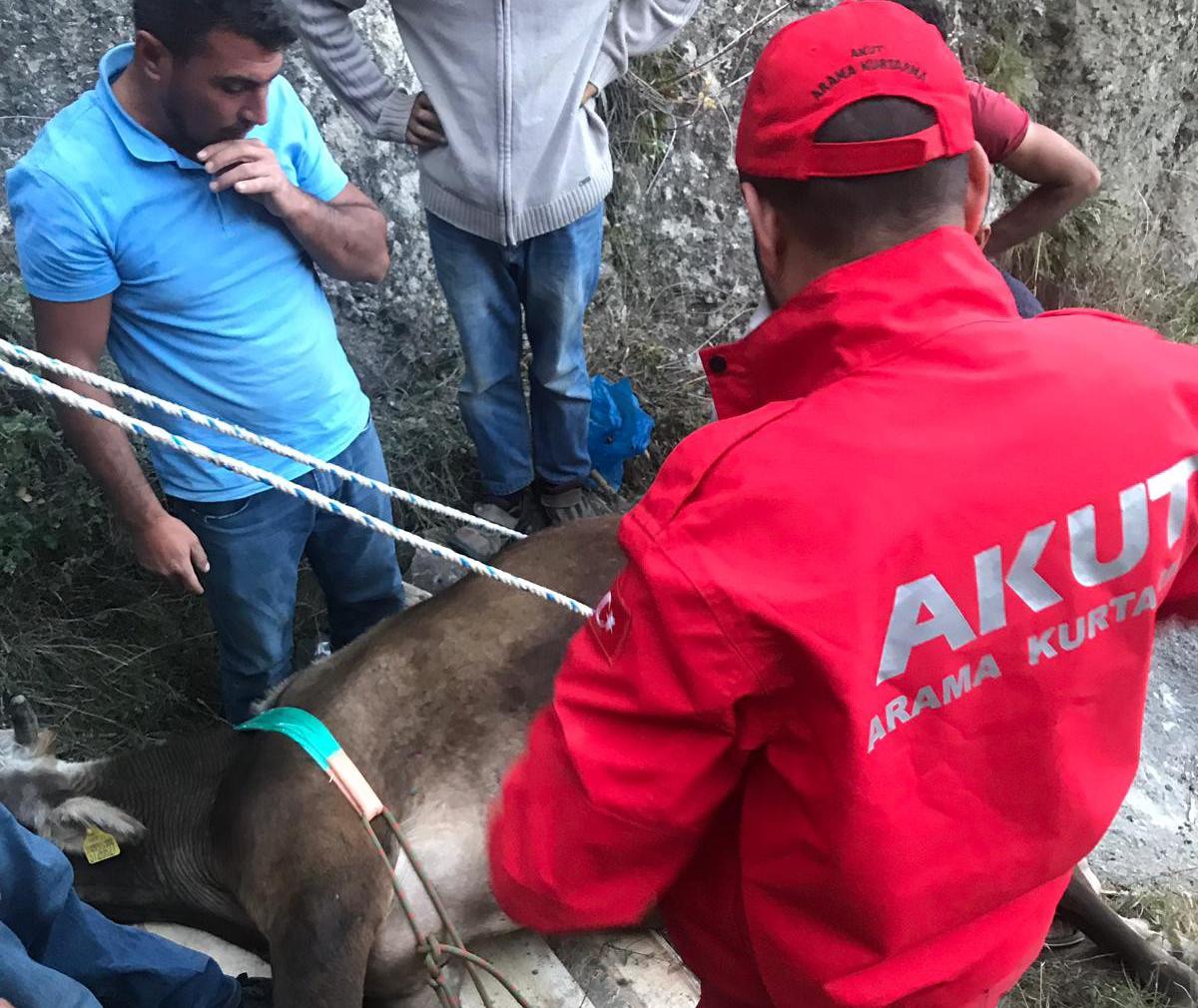 Düşen hayvan akut ekipleri tarafından kurtarıldı
