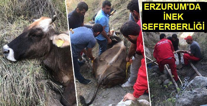 60 Metreden Düşen Hayvan Akut Ekipleri Tarafından Kurtarıldı