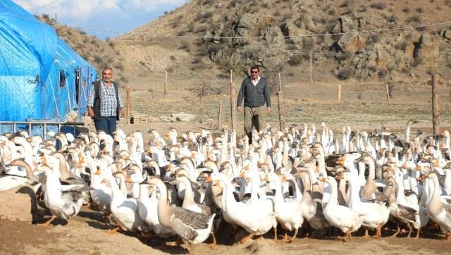 Emekli Olup Kaz Çiftliği Kurdular