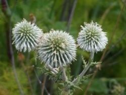 Erzurum bitki zengini
