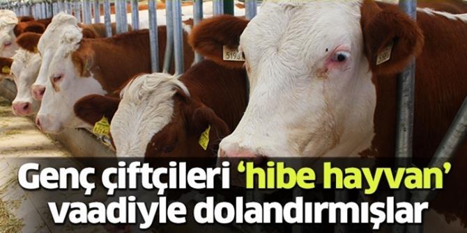 """""""Hibe hayvan"""" dolandırıcılığında 16 tutuklama"""