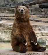 Erzurum'un ayısı sakat çıktı