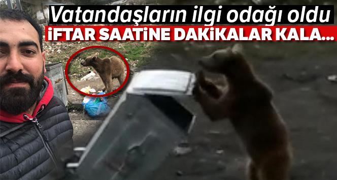 Sarıkamış'ta yemek kokusu yavru ayıyı sokağa indirdi