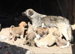 Tam 20 yavru doğurdu!