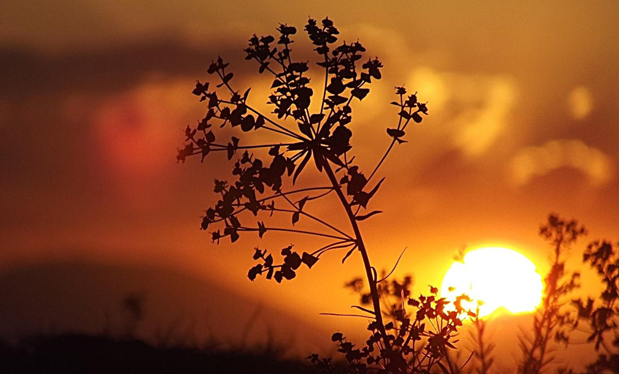 Doğu Anadolu, Afrika sıcaklarının etkisi altına girdi
