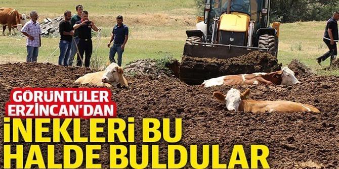 Erzincan'da inek kurtarma operasyonu