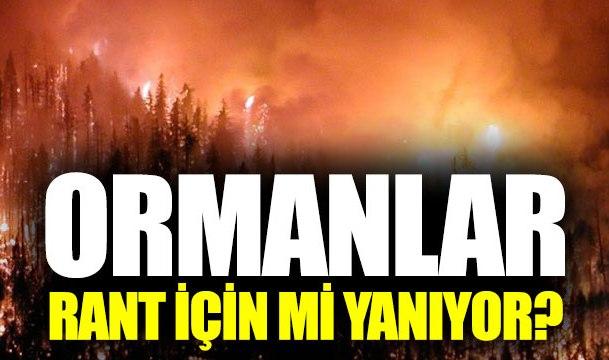 Muğla'da ormanlar rant için mi yakılıyor