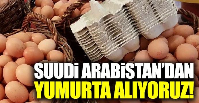 Suudi Arabistan'dan yumurta alıyoruz