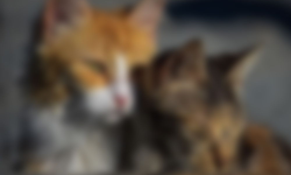 iki kedinin üzerine kaynar su dökülerek öldürüldüğü iddia edildi