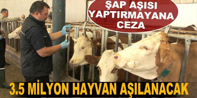 Erzurum'da 3.5 milyon hayvan aşılanacak