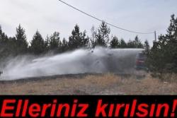 Birileri ormanlarımızı yakıyor!