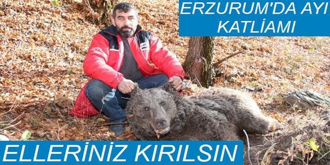 Erzurum'da boz ayıyı vurdular