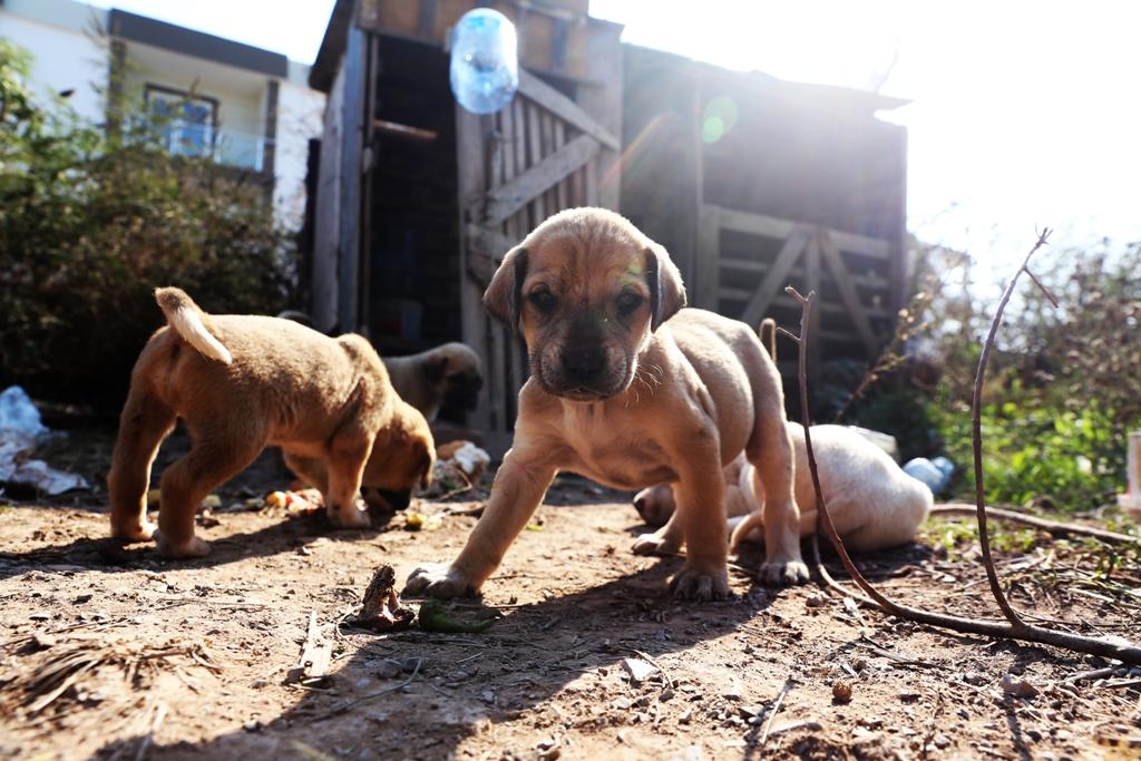Bodrum Belediyesi köpekleri koruma altına aldı