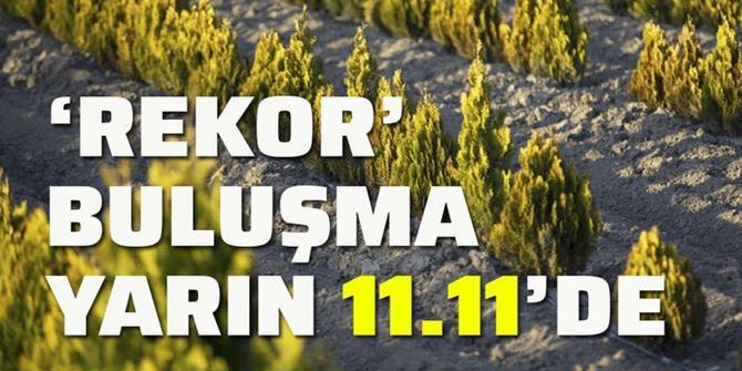 11 milyon fidan yarın toprakla buluşacak