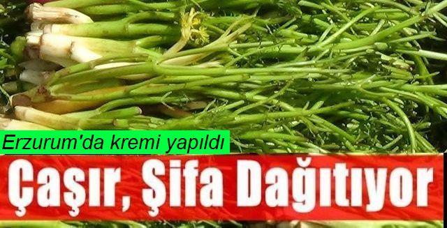 """Atatürk Üniversitesinden akademisyenler """"çaşır""""dan krem üretti"""