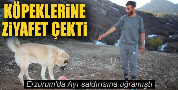 Kendisini ayıdan kurtaran köpeklerine ziyafet çekti