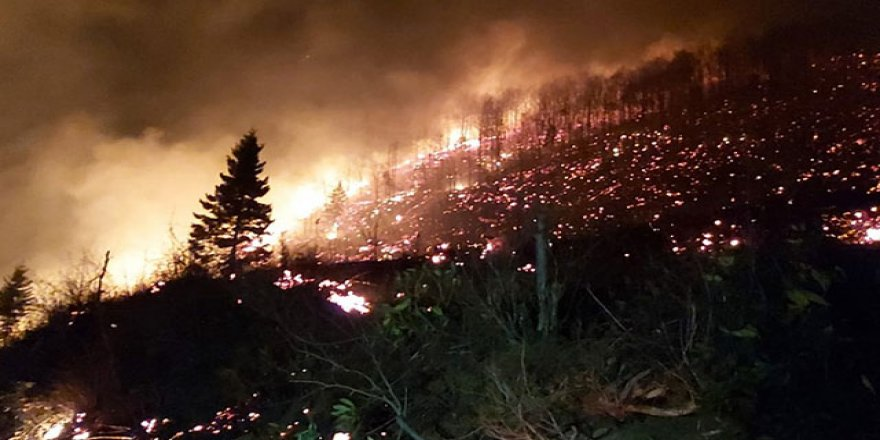 Karadeniz'de çıkan şüpheli yangınlar ile ilgili açıklama!
