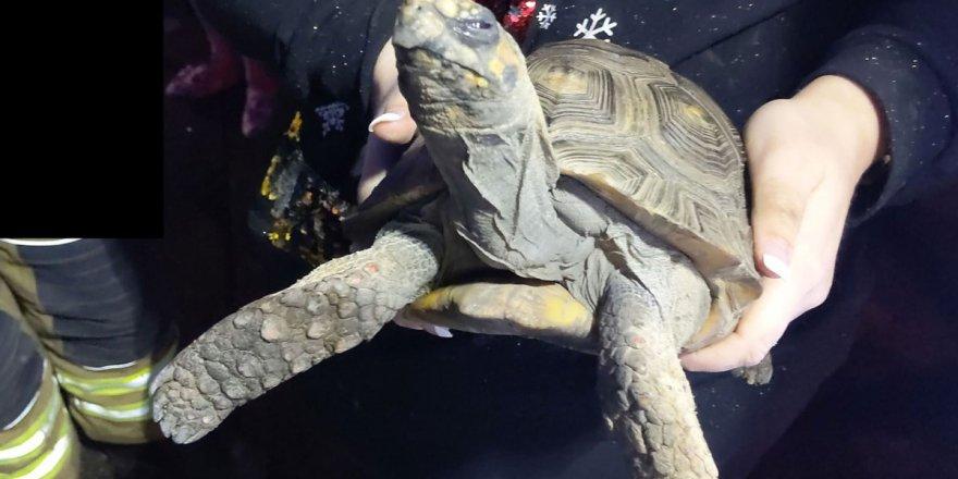 Kızgın kaplumbağa evde tek başına kalınca evi ateşe verdi!