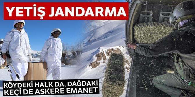 Yetiş Jandarma