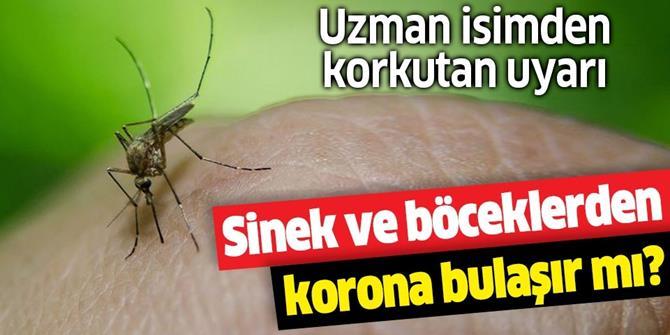 Koronavirüs böcek ve sineklerle bulaşır mı?